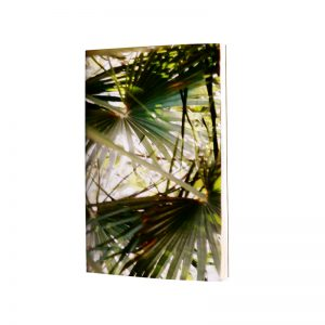 laisse toi tenter par l'ombre d'un palmier pour fermer les yeux quelques secondes et profiter du temps présent