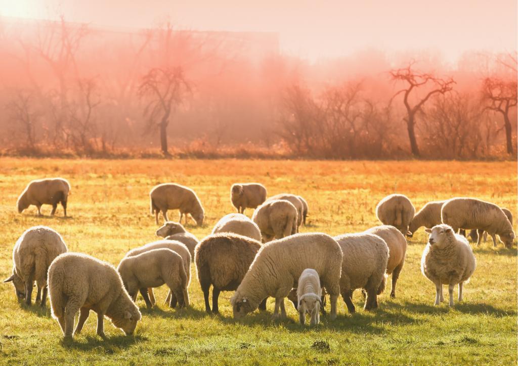 Suivre le troupeau n'aide pas à la créativité