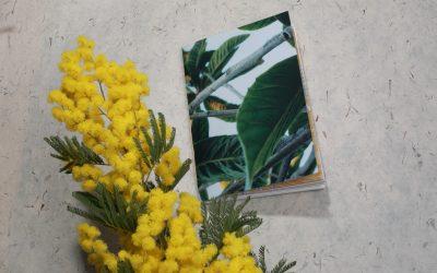 Art journal : Des carnets raturés